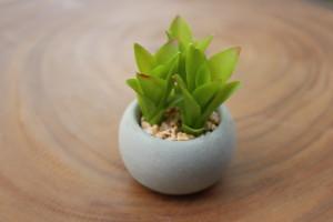 """Succulent with Cement Pot (E) 2.5""""d x 3""""h $4.76"""