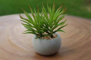 """Succulent with Cement Pot (F) 2.5""""d x 3""""h $4.76"""